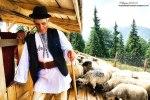 Masuratul-oilor,adunatul-mioarelor