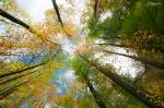 Amazing-trees