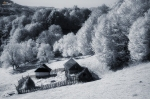 Infrared-photography-2