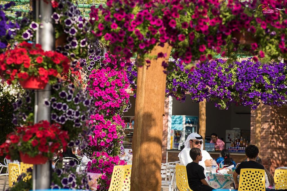 Miracle-gardens-Dubai2