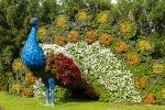 Peacock-miracle-gardens